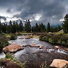 Rainy Day in Yosemite by Cat Connor