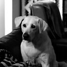 The Puppy Inside by Mark Batten-O'Donohoe