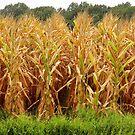 Corn by WildestArt