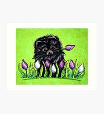Black Pomeranian in Tulips Green Art Print
