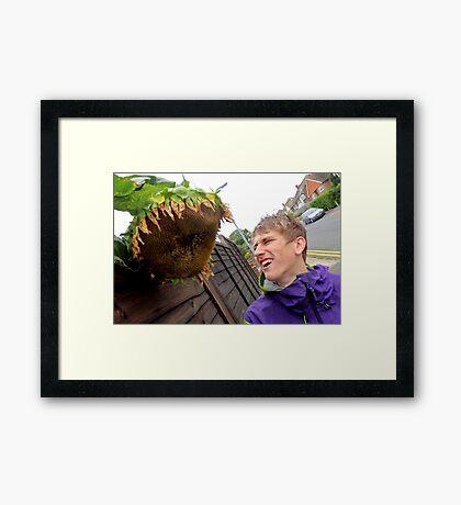 Attack of the Killer Sunflowers Framed Print