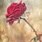 Musical Rose by Beth Mason