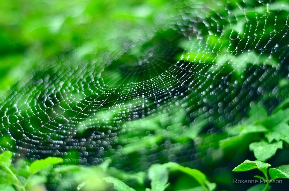 Web by Roxanne Persson