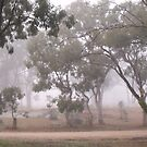 Foggy Australian Bush by Judy Woodman