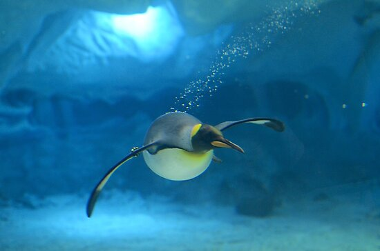 Penguin Blues by Lauren Waters