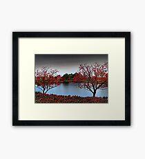 Erythrina Trees  Framed Print