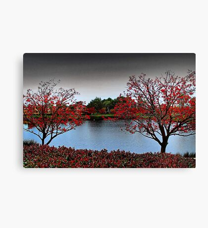 Erythrina Trees  Canvas Print