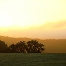 Golden sunrise by kateabell