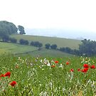 Poppies and Sea Mist by Sue Robinson