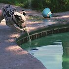 Pepper herding the pool cleaner by Sherry Cummings