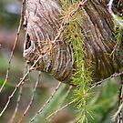 Hornet's nest... by RichImage