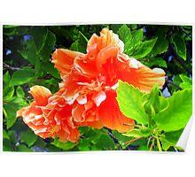 Bright hibiscus bough Poster