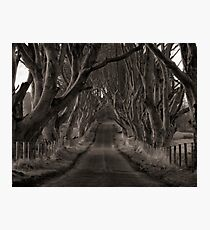 The Dark Hedges Of Armoy Photographic Print