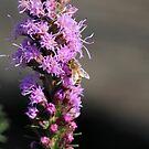 Bee by Annie Underwood