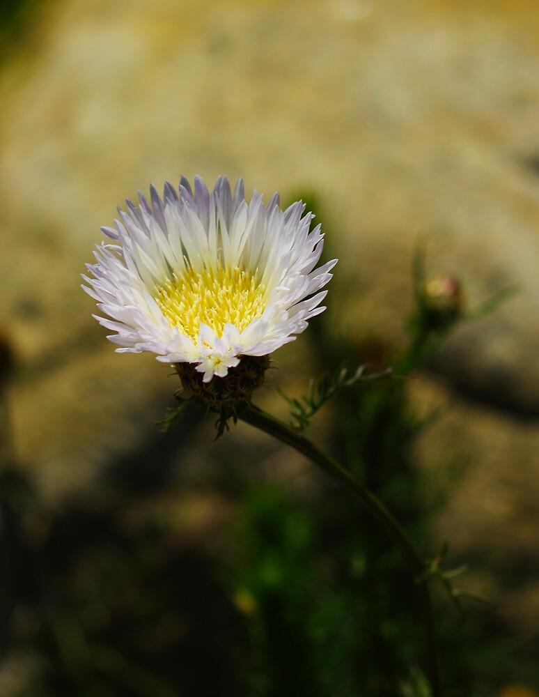 Purple Flower Bokeh by Lostlogo