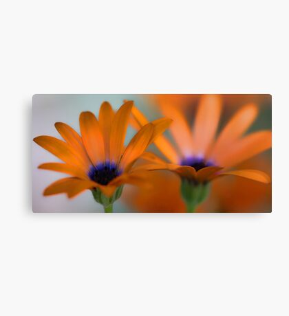 Orange Symphony Canvas Print