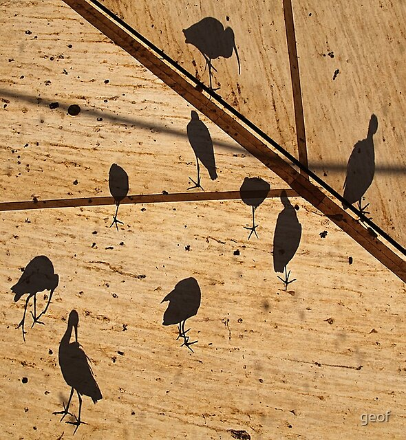 birds on the roof (from beneath.) by geof
