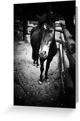 Sad Pony by Alex Volkoff