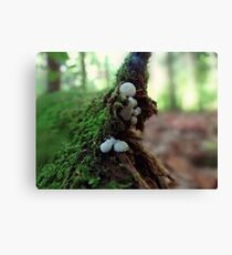 What a small world Canvas Print