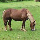 Beautiful Horse - watch video! by virginian