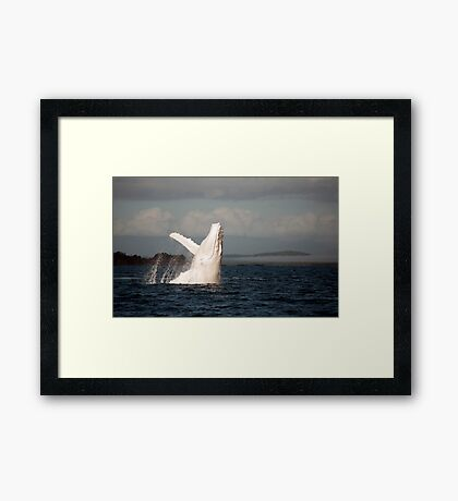 White Whale Wave - Migaloo Framed Print