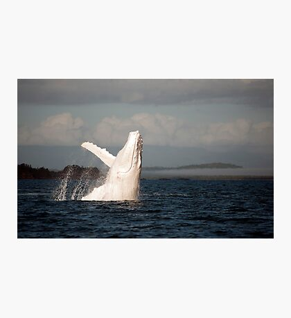White Whale Wave - Migaloo Photographic Print
