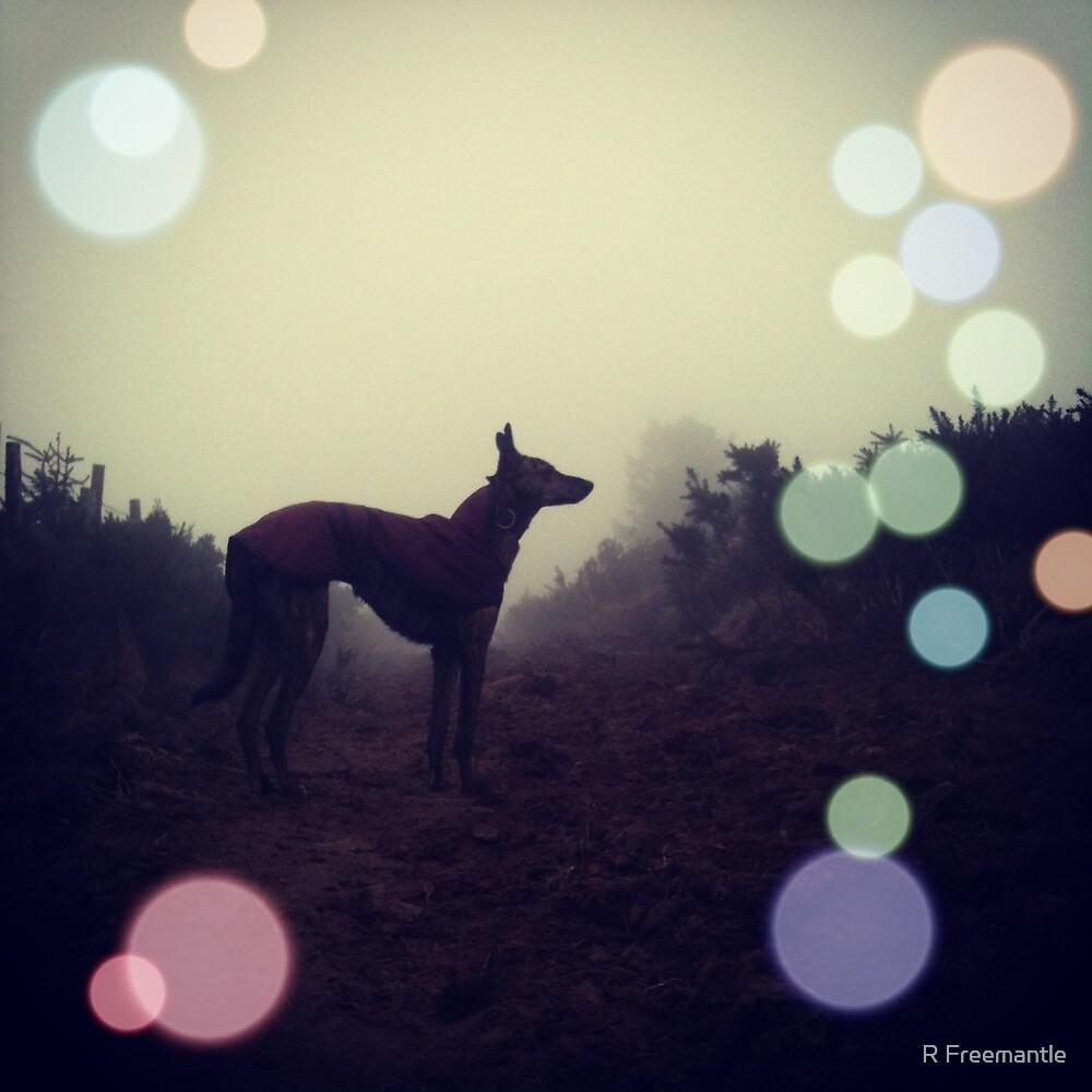 Bokeh Beastie by Rebecca Eldridge