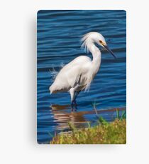 Snowy Egret at the Pond  Canvas Print