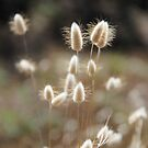 Fluffy Grass #1 by KUJO-Photo