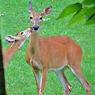 A Deer Kiss by Ron Russell
