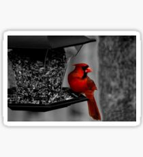 Cardinal at the feeder. Sticker
