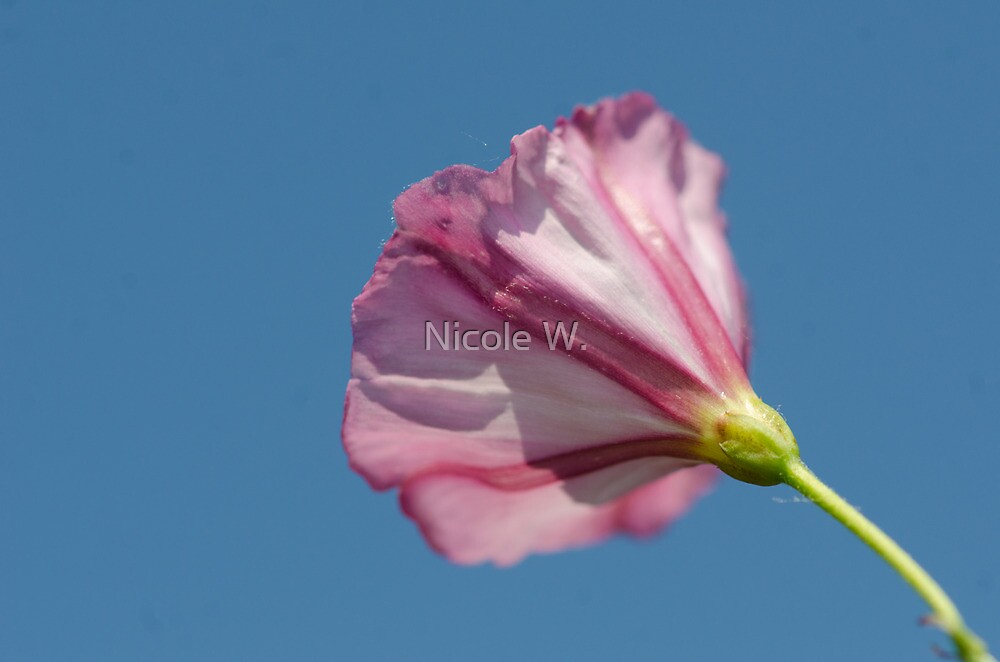 piink on blue by Nicole W.
