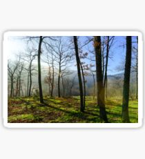 Beauty of winter forest with moss, sunny day, nature concept Sticker