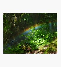 Rainbow in the Forest Photographic Print