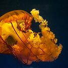 Jellyfish No. ! by gharris