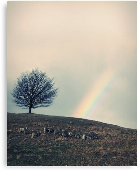 Chasing rainbows and counting sheep. Same thing really. by John Medbury (LAZY J)