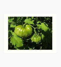 Fried Green Tomatoes Art Print