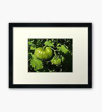 Fried Green Tomatoes Framed Print
