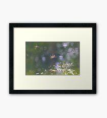 Red Dragon Fly in flight Framed Print