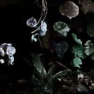 Floating Orchids  by Wayne King