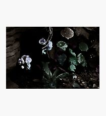 Floating Orchids  Photographic Print