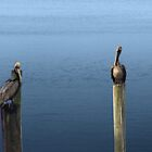 Pelicans In Carrabelle by Cleave