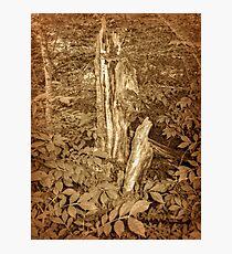 Dead Tree Still Standing Photographic Print
