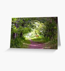 woods 14 Greeting Card