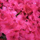 Flowers by Ostara