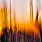 The Burn by Steve Belovarich