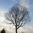 Virginia Tree by Stefanohbody