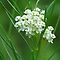 """""""Flowers White and Green"""""""