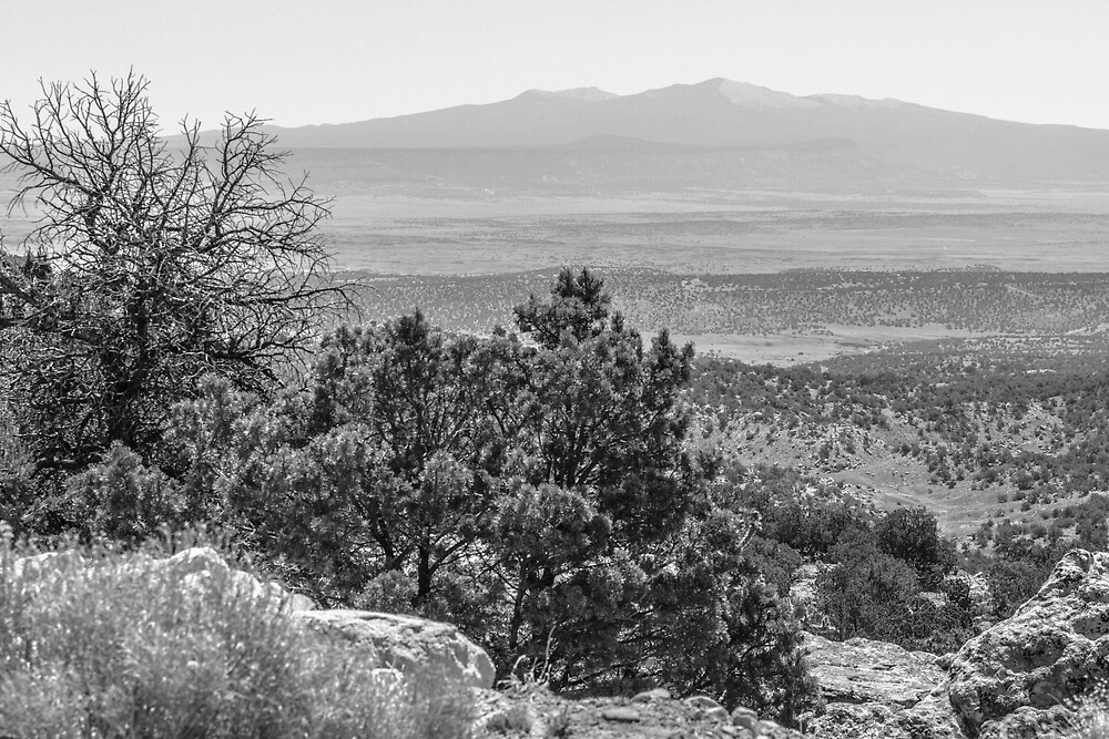 Arizona II by Steve Belovarich