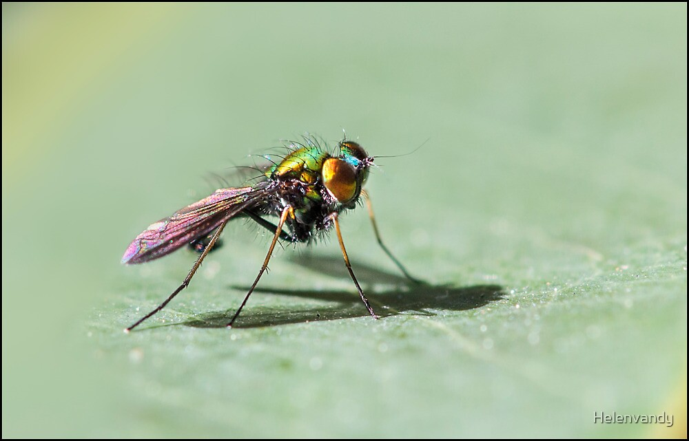 Fluro Fly by Helenvandy